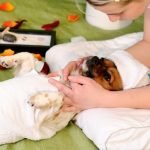 Massagem relaxante em animais